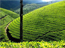 Kerala tours and travels prompttravels