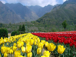 North east india tour packages prompttravels