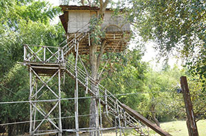 Masinagudi - Tree House