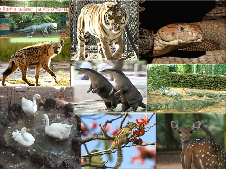 guindy-national-park