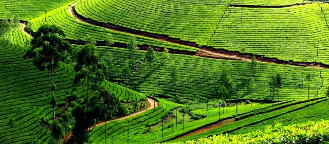 Best Hill Stations to plan your vacation in South India
