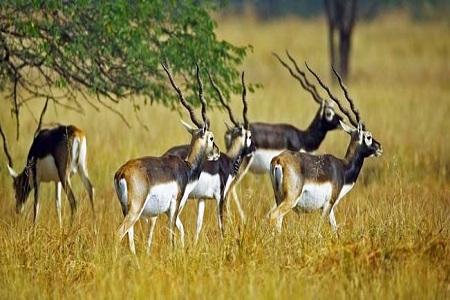 Guindy National Park