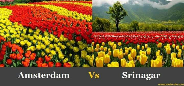 amsterdam-vs-srinagar