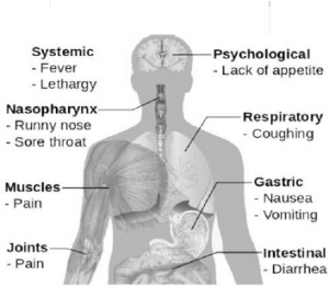 structure-of-swine-flu-sushaanth-homeoclinc-chennai